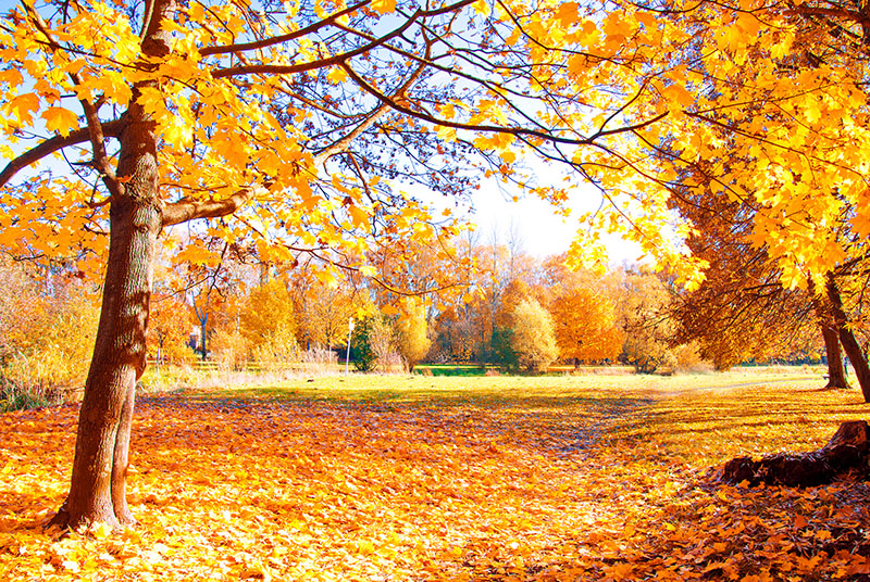 outono na florida